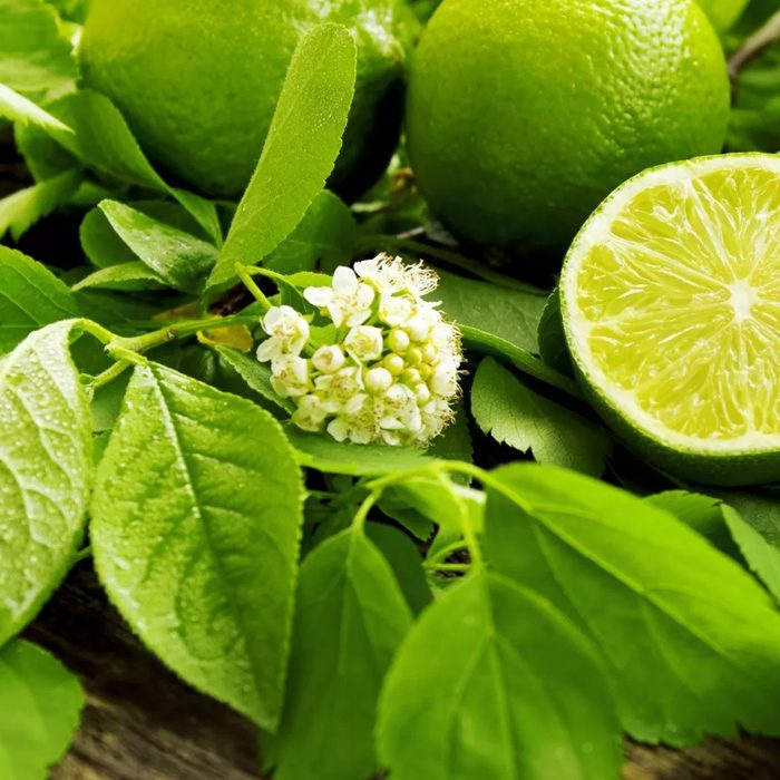 LIME EXPRESSED